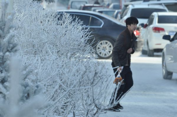 Plants are covered with snow in Hulunbuir.