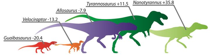 A comparative infographic of speed adaptation scores for (from left to right) Guaibasaurus, Velociraptor, Allosaurus, Tyranno