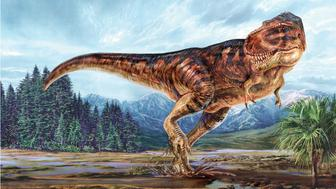 Illustration showing a Tyrannosaurus rex leaving footprints on muddy ground.