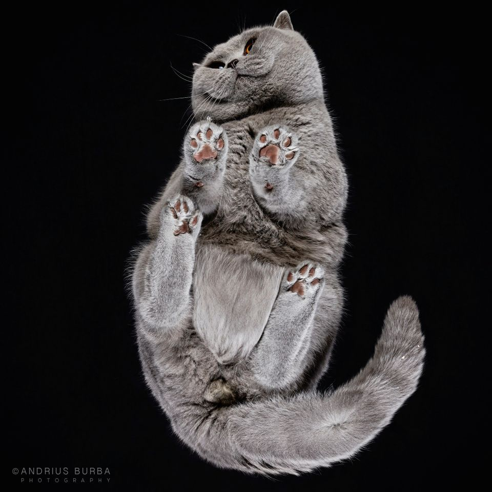The 23-year-old photographer was recently inspired to go deep into the underbelly of the cat world by photographing them from