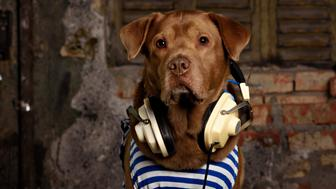 labrador  listening to music in Headphones in the trash scenery