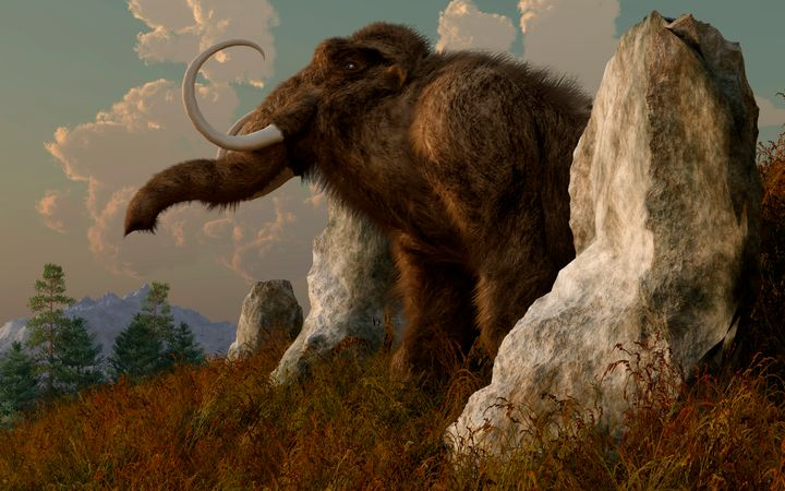 The bones of a mammoth were found at Oregon State University's Reser Stadium.