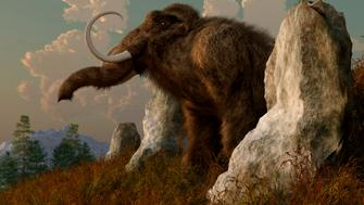 A mammoth standing among stones on a hillside.