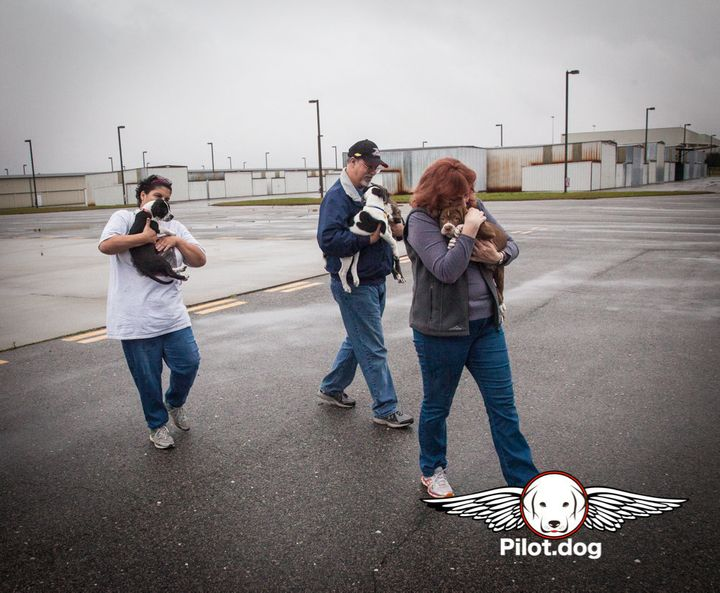 The puppies are carried from the van by Gigi, Mike, and Pam to the airplane and loaded for their flight to safety.