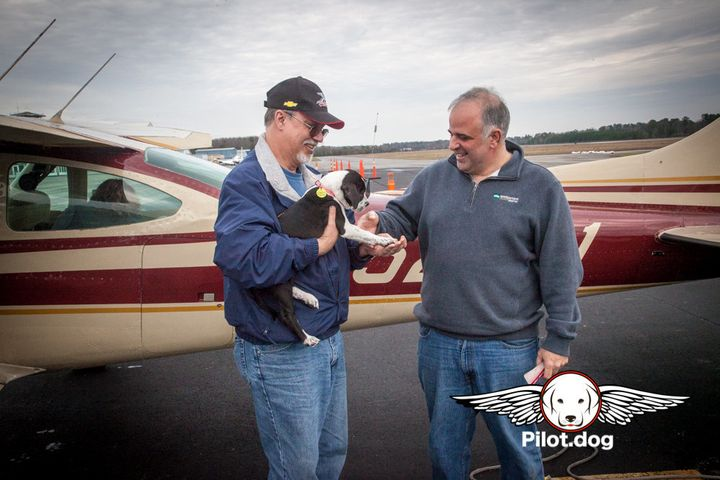 Our in-flight volunteer, Mike, prepares to hand one of the puppies to Tony for the next leg of the flight.