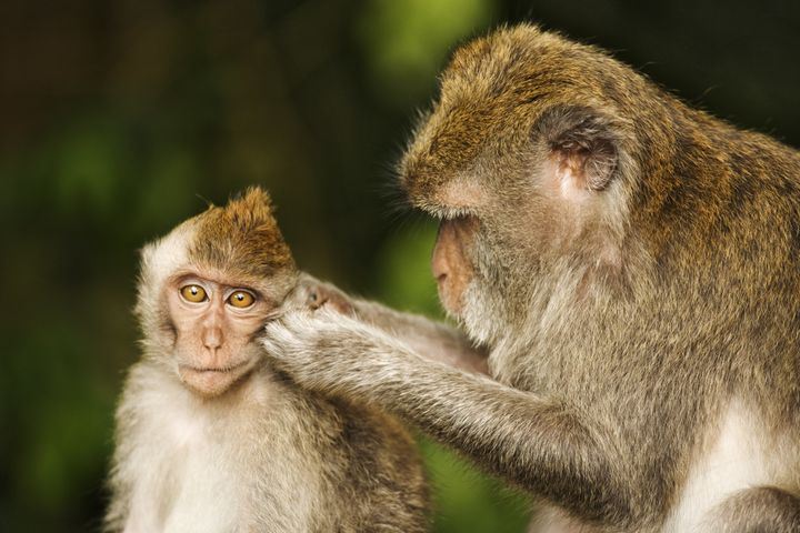 "Primates have also been used in recent years to study <a href=""http://animalresearch.thehastingscenter.org/report/using-monke"