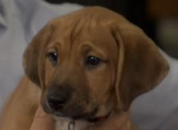 Want To Learn Everything About The Puppy Bowl? Watch This.