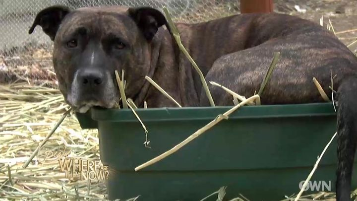 Linda Blair knew nothing about pit bulls except the negativity she'd heard on the news. Then, this sweet stray pup followed h