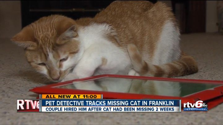 Marmalade, a 7-month-old cat, is seen after being reunited with her owners in Franklin, Indiana.