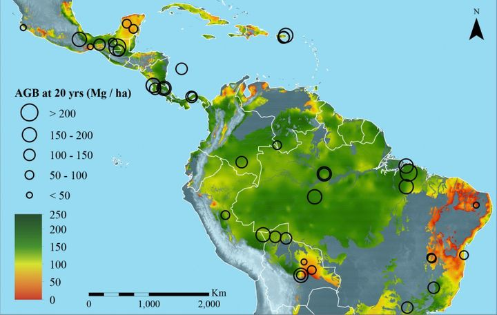 The researchers urge policymakers to use this map to prioritize forests for conservation.
