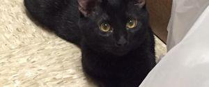 BLAKE CAT