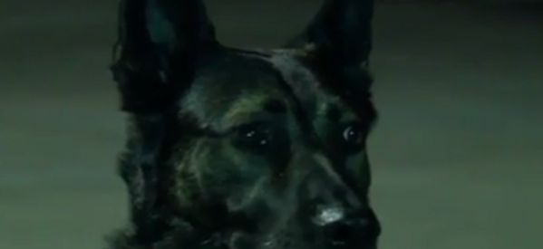 Retired Cop Finally Wins Fight To Save Police Dog From Auction