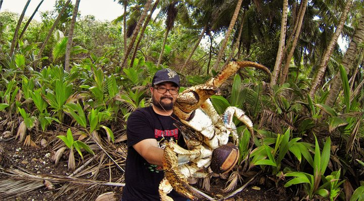 Australian Mark Pierrot poses with a massive coconut crab on Christmas Island.