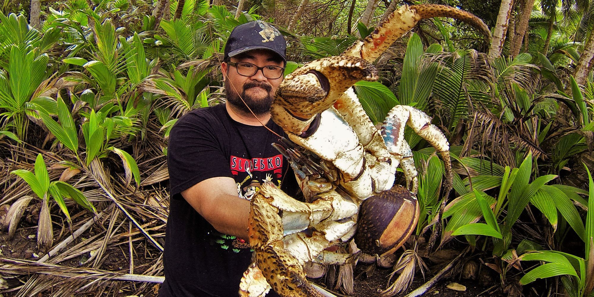 Holy Crab! Fearless Australian Poses With Massive Coconut ...
