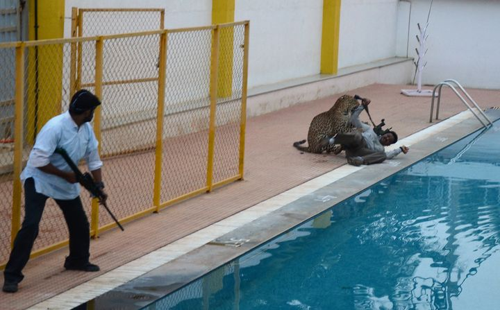 A man with a tranquilizer gun looks on as a leopard attacks a man identified as Sanjay Gubbi.