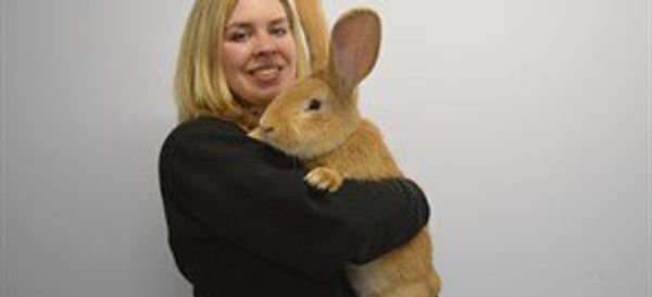 Adorable Dog-Sized Rescue Rabbit Is Looking For New Home