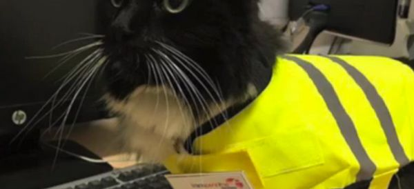 WATCH: Train Station's Top Cat Earns Mouse-Catching Promotion, And Her Own  Uniform