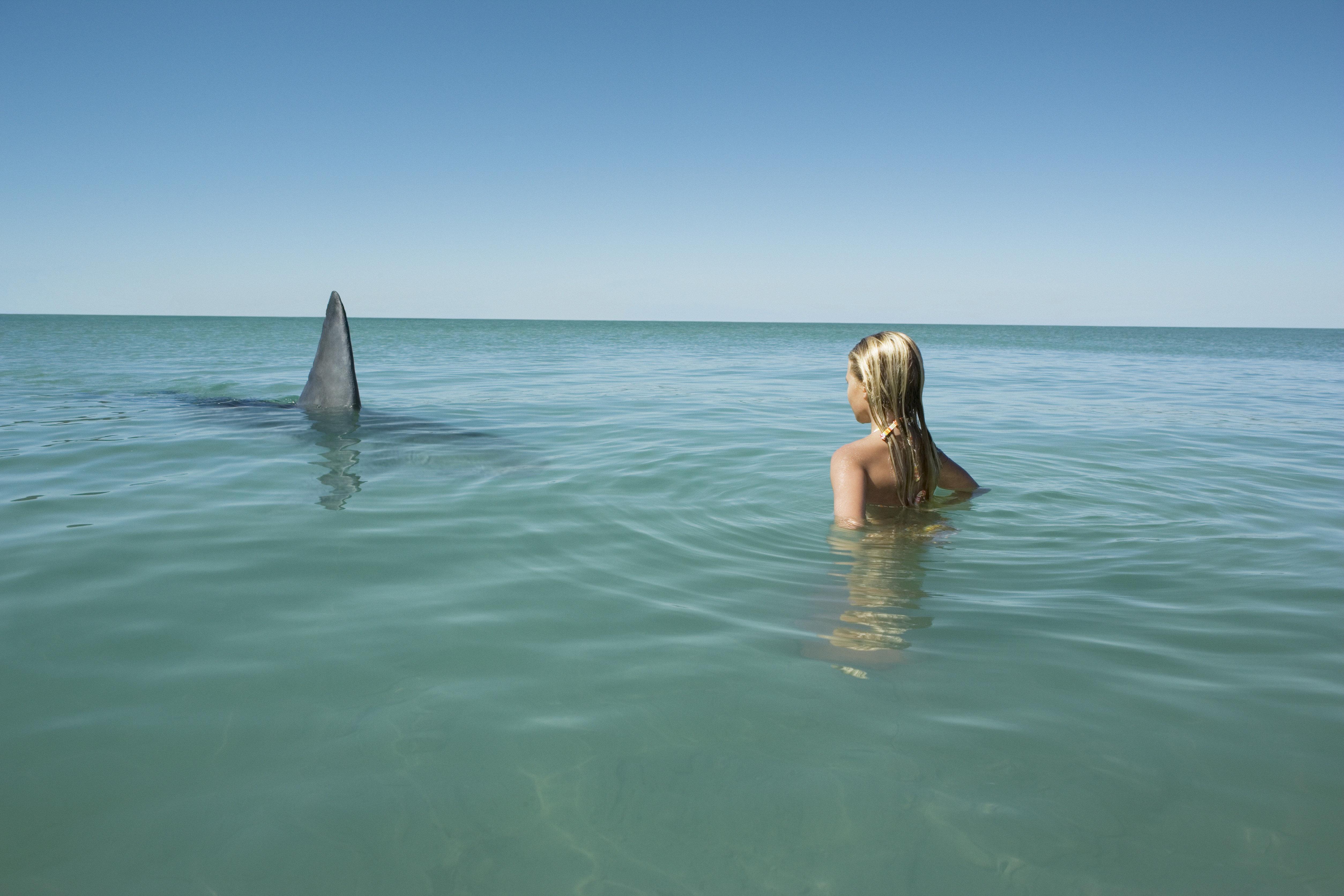 Digital Enhancement, model made shark fin.