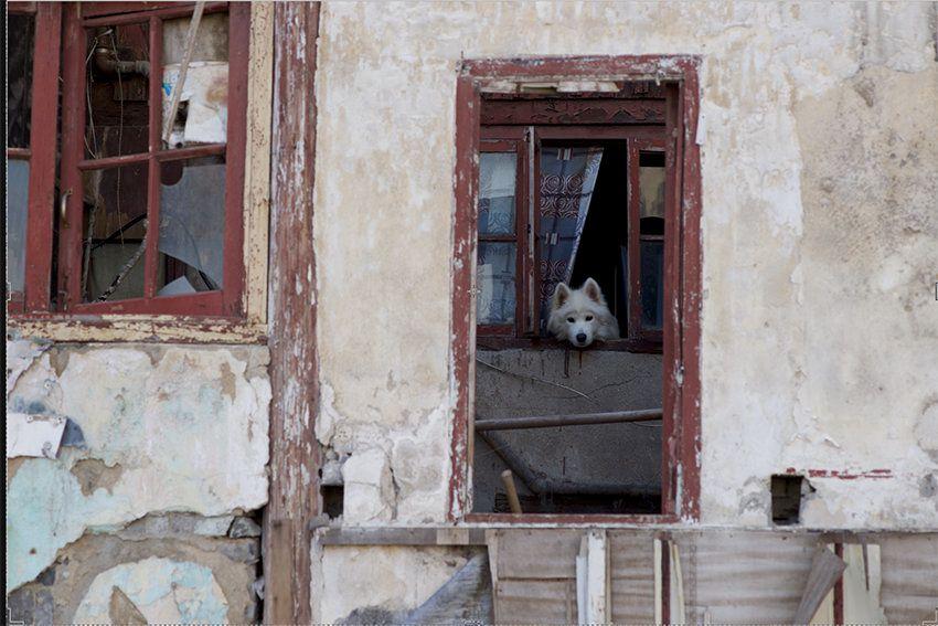 "GRAHAM FINK/RIFLEMAKER GALLERY ""Dog"""