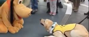 SERVICES DOG GETS EXCITED GOOFY