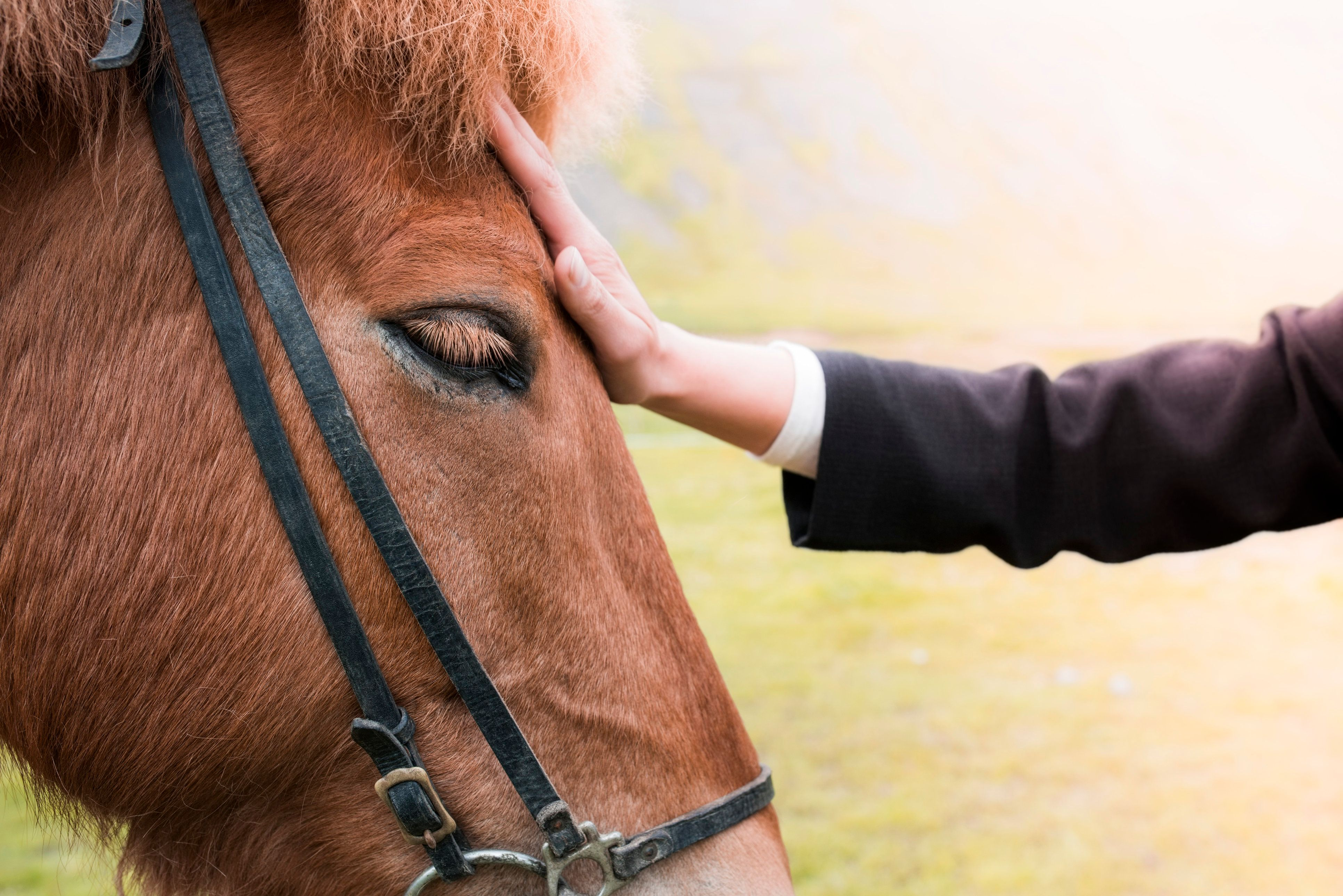 Horses' heart rates increased at a faster rate when they viewed photos of an angry facial expression.