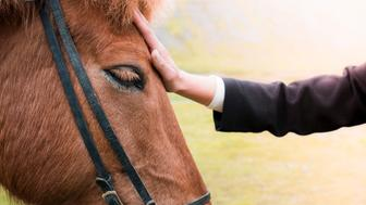 Cropped image of hand stroking horse on field