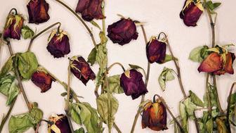 Still life of a dozen dead red roses.