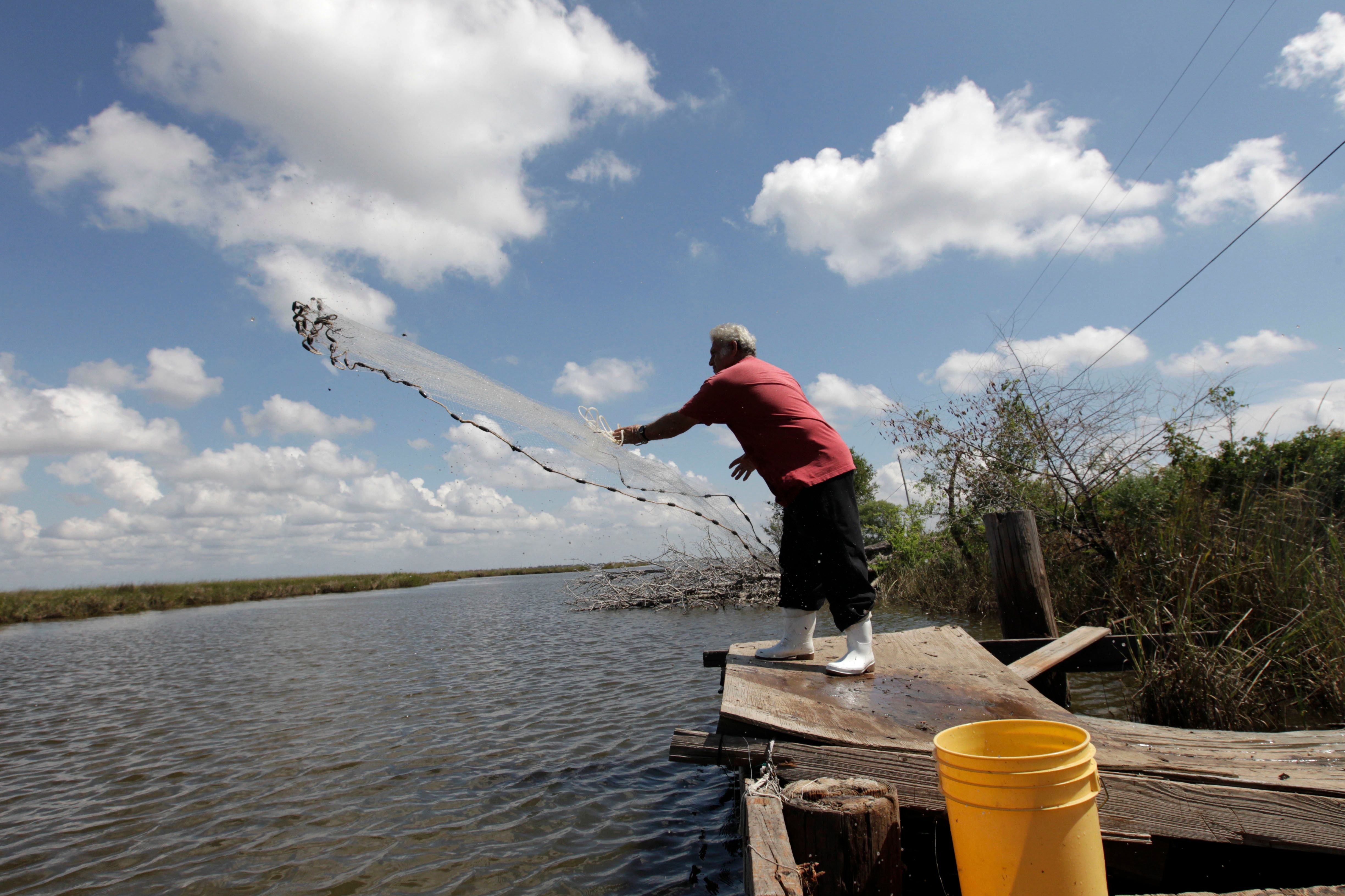 Edison Dardar, an American Indian, tosses a cast net for shrimp on the edge of Pointe-aux-Chenes wildlife...