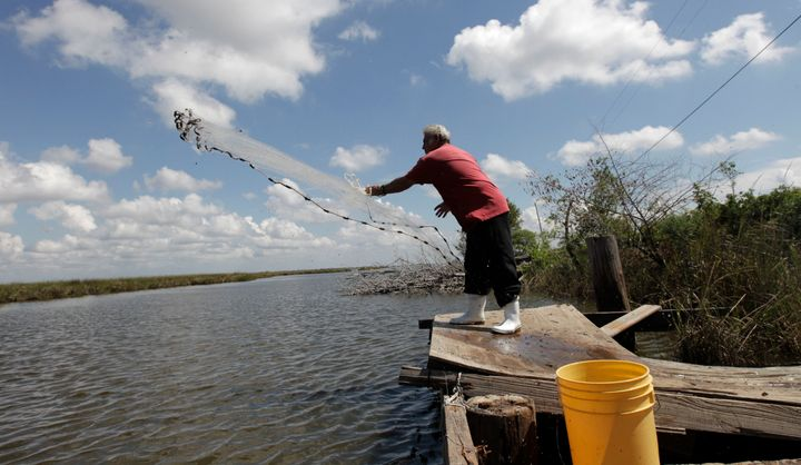 Edison Dardar, an American Indian, tosses a cast net for shrimp on the edge of Pointe-aux-Chenes wildlife management area, in