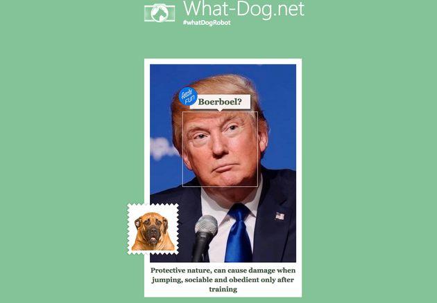 「あなたに似ている犬」を教えてくれるサイトが登場