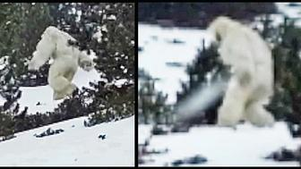 yeti seen in Pyrenees Mountains