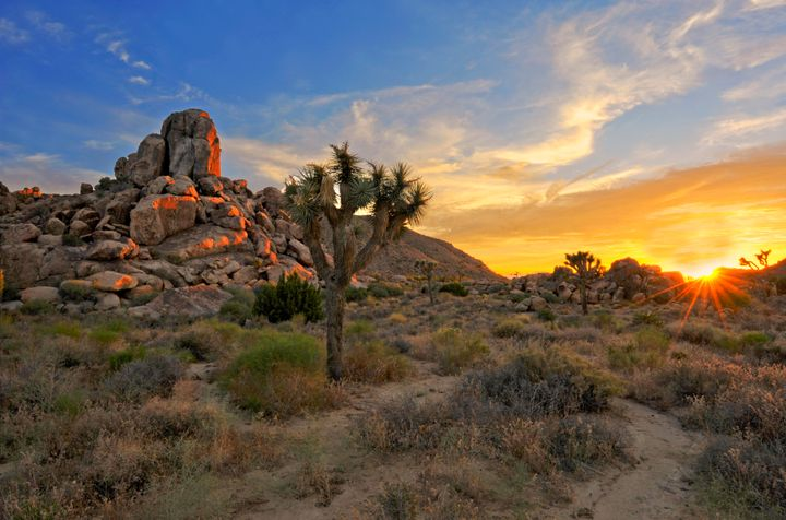 Joshua Tree National Park Is The Most Beautiful Place In