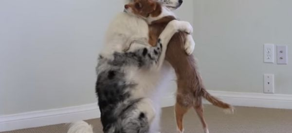 Adorable Dogs Teach Us How To Properly Hug It Out