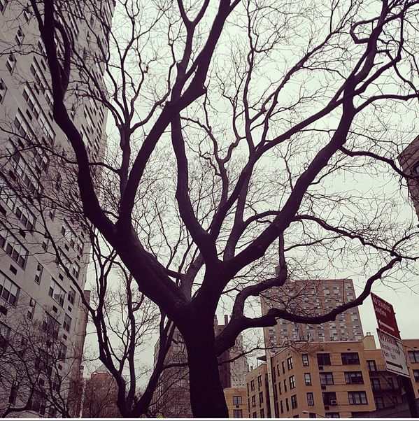 Wintry tree in New York's East Village, filtered with Valencia.