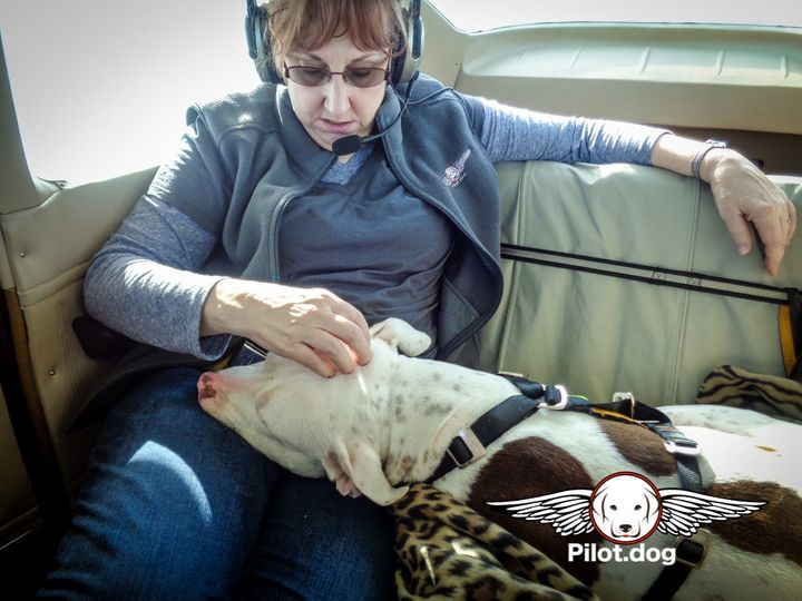 Goblin rests his head in Pam's lap as we fly him to his new home.