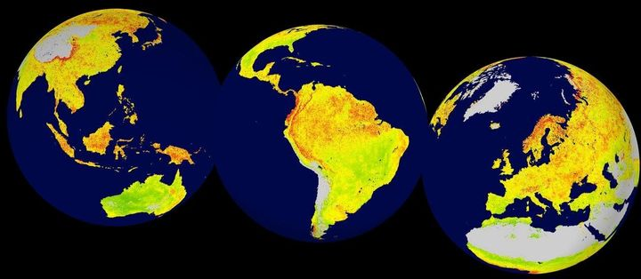 This globalmap shows where vegetation is most sensitive to climate variability. Red indicateshigher ecosystem sen
