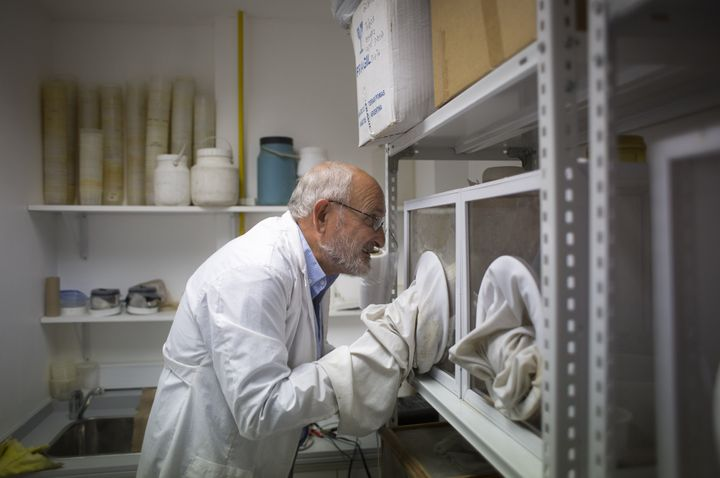 Dr. Juan Garcia, director of the Center for Parasitological Studies and Vectors of the Faculty of Natural Sciences of La Plata National University, takes a sample of <i>Aedes aegypti</i> mosquito larvae&nbsp;in&nbsp;Argentina on&nbsp;Feb. 17, 2016.