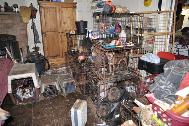 52 Severely Neglected Animals Rescued From A Hoarder's Home