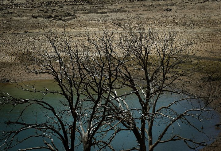 Dead trees are seen by a dried up section of New Melones Lake, California. The state has endured four dry summers and four wi
