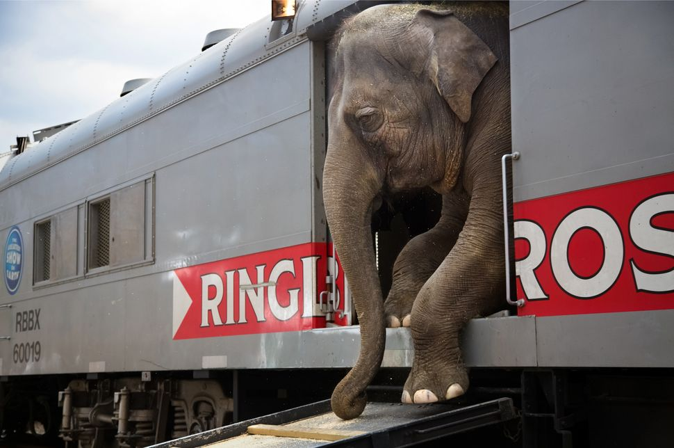"""There are more than 300 people that [travel] with the Ringling Bros. and Barnum & Bailey circus blue unit, representing"