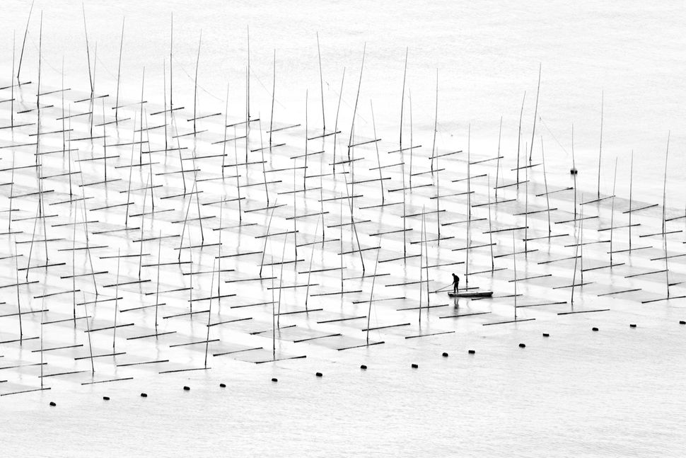 """A fisherman is farming the sea in between the bamboo rods constructed for aquaculture off the coast in southern China."""