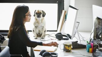 Businesswoman working on computer in high tech startup office with dog sitting on desk watching