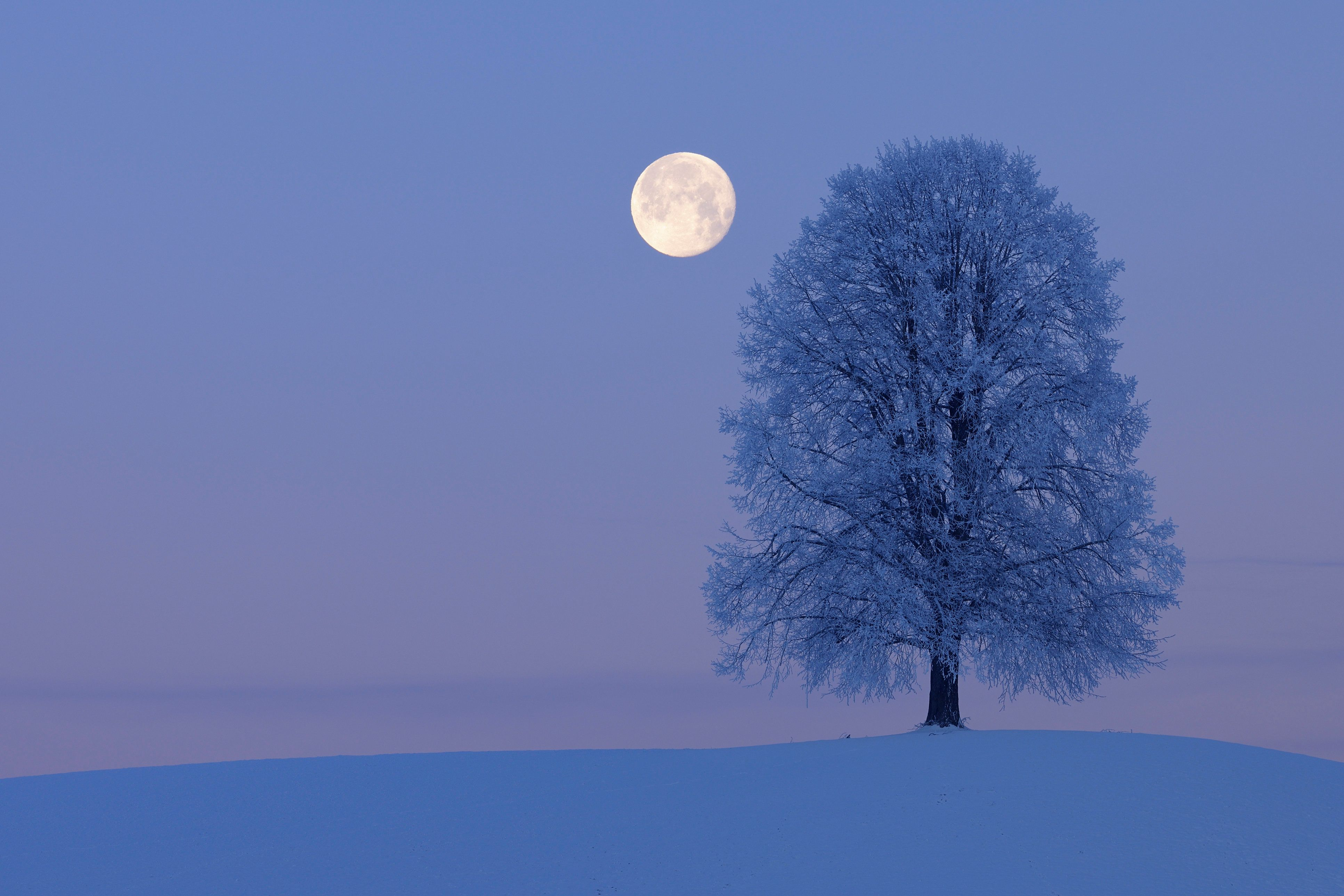 Solitude Lime Tree (Tilia spec.) on hill with full moon at dawn, snowy winter landscape. Canton Zug, Switzerland, Europe.