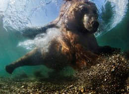 8 Awesome Photos That Showcase The Wonders Of Underwater Life