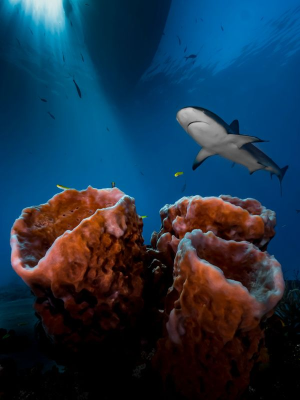 "This image of a shark won ""Up & Coming Underwater Photographer of the Year."""
