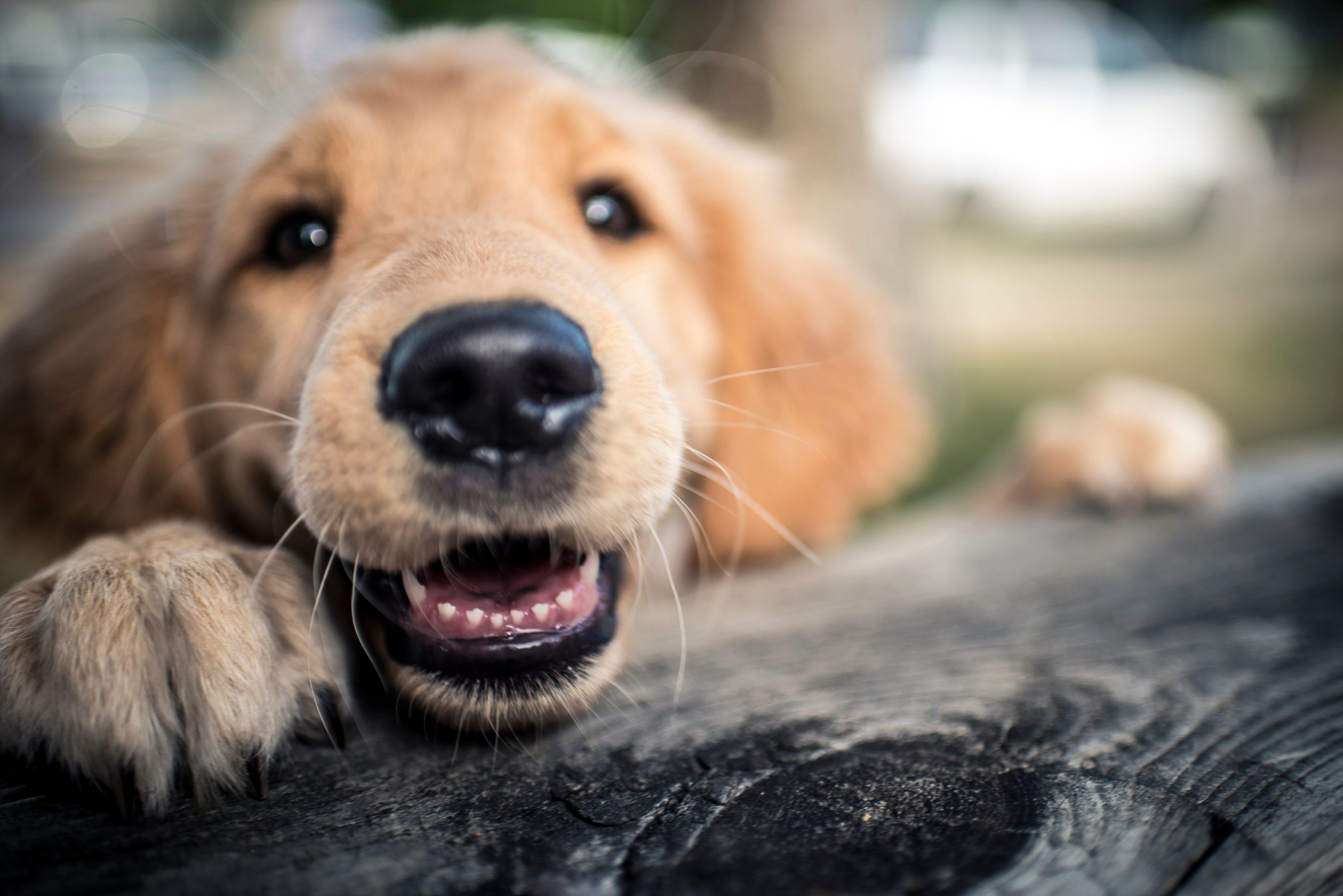 4 Things You Can Do To Make Your Pet Happier And Healthier