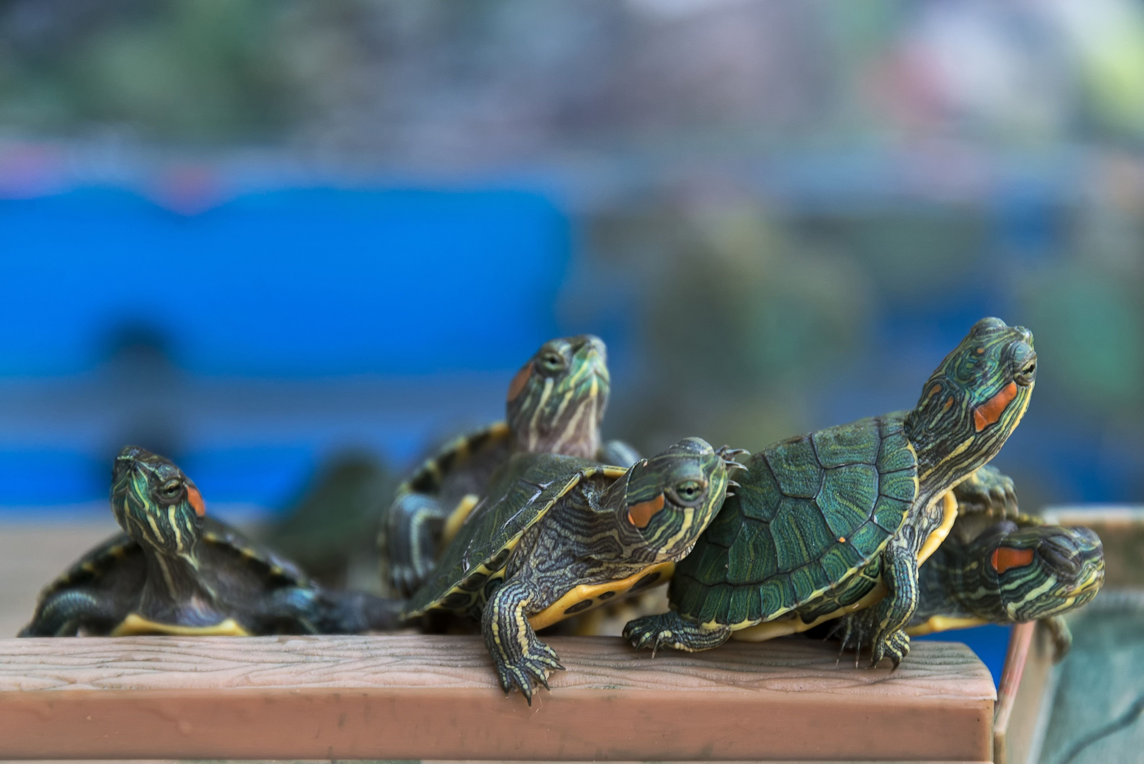 Turtles from Canadian man's pants not pictured.