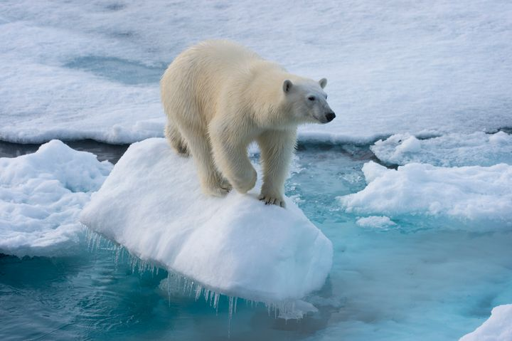 Some believe that because the EU lacksan Arctic coastline,it has no businessin Arctic territory.