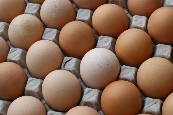 "One large, whole egg has <a href=""http://ndb.nal.usda.gov/ndb/foods/show/112"" target=""_blank"">almost 5 grams of fat</a>, incl"