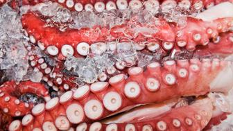 Japan, Tokyo, Tsukiji Fish Market, close-up of Octopus in ice
